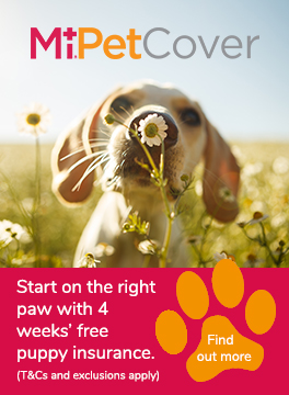 MiPet Cover puppy advert
